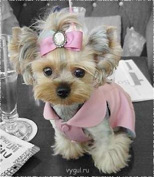 люблю гулять с собаками и хорошо за ними ухаживаю - Маленькая Модница.jpg