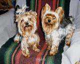 Домашняя гостиница для собак - Копия P110044 (16).JPG