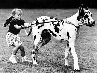 Выгул собак за деньги у МКАД - DogWalk 320 на 240.jpg