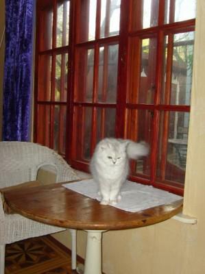 Передержка для домашней кошки - S7000754.JPG