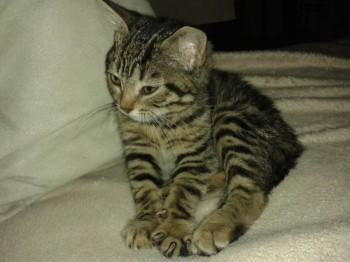 Мурманский Приют для кошек и собак - 1 024.jpg