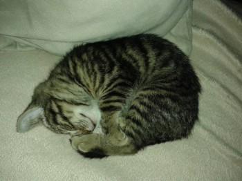Мурманский Приют для кошек и собак - 1 026.jpg