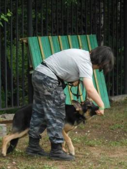 Выгул, дрессировка, передержка, услуги зоопсихолога в Москве и области - 20.jpg