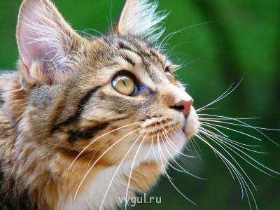 Домашняя квартирная передержка кошек. - wallpapers_67659.jpg
