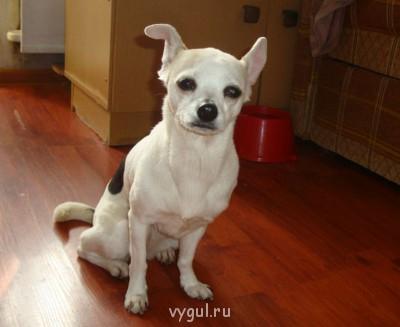 Домашняя гостиница для собак - DSC22042014 (35) - копия.JPG