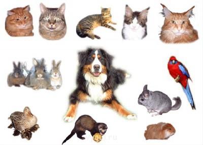 Передержка для животных Зооняня м.Коньково - 73777_1417421009_1.jpg